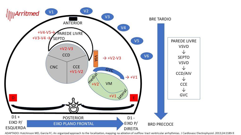 Legenda: CCD- cúspide coronária direita; CCE- Cúspide coronária esquerda;  CNC- cúspide não coronariana; VM- V. mitral; VIA- veia interventricular anterior; GVC- Grande Veia cardíaca